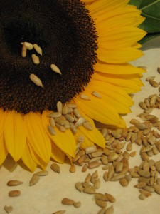 Healthy fertility recipe sunflower seed pate