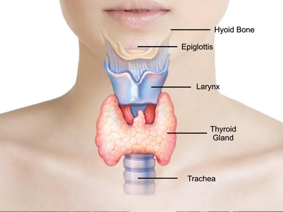 3 Reasons Thyroid Imbalance Can Cause Infertility