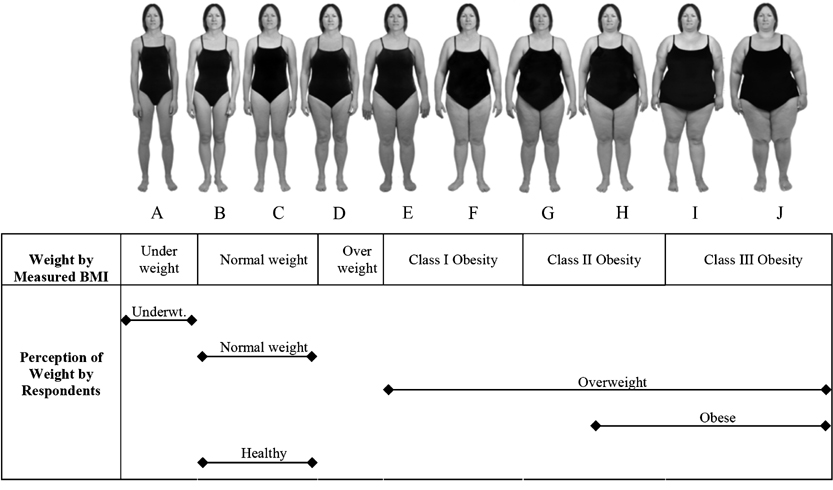 BMI-based body size guides for women and men [Image Credit: International Journal of Obesity]